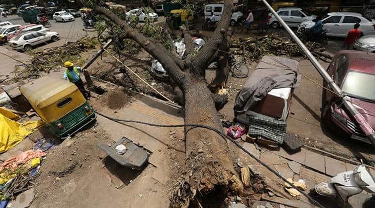 Delhi Budget 2019: Tree mantra — transplant, don't cut