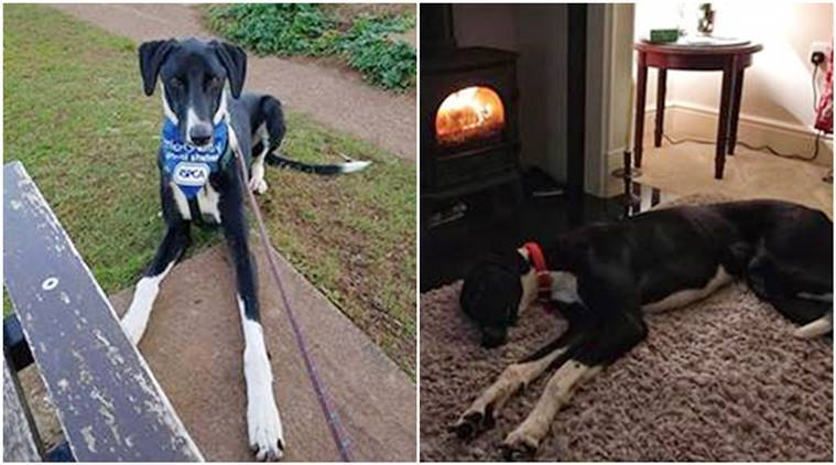 World loneliest dog, UK's loneliest dog, rescue dog, hector rescue dog, RSPCA, viral story, good news story, dogs for adoption,