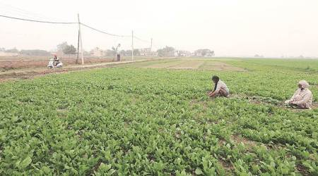 Pune institute works on model to improve crop insurance