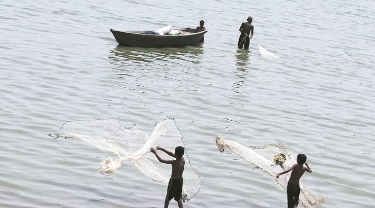 Interim Budget: Shrimp Farmers Give A Thumbs Up To Gujarat Govt