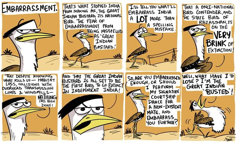 great indian bustard, cartoon, bird, endagered