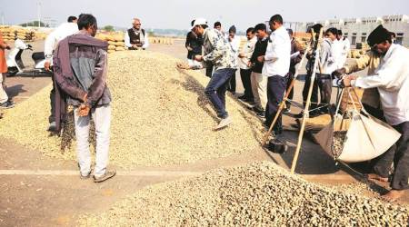 Gujarat, Gujarat farmers, Gujarat groundnut farmers, quality of groundnuts, average quality ground nuts, groundnut crop, government procuring groundnut, indian express