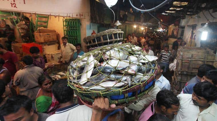 hilsa, hilsa fish, hilsa fish price, hilsa recepie, hilsa Padma river, hilsa Ganga river, Indian express