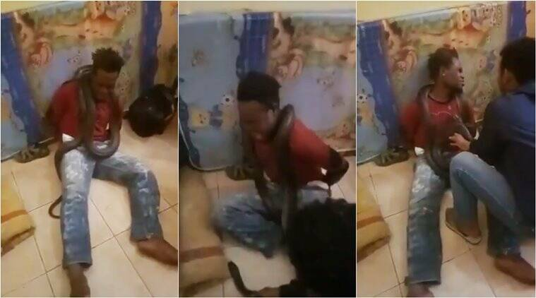 indonesia police, indonesia police papua interrogation, police use snake for interrogation, viral video, indian express, world news,