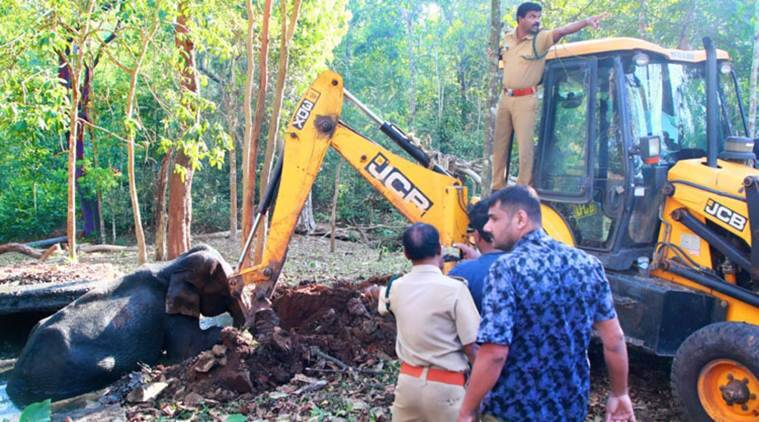Kerala: Baby Elephant Rescued Near Thekkady With Help Of Forest Officials