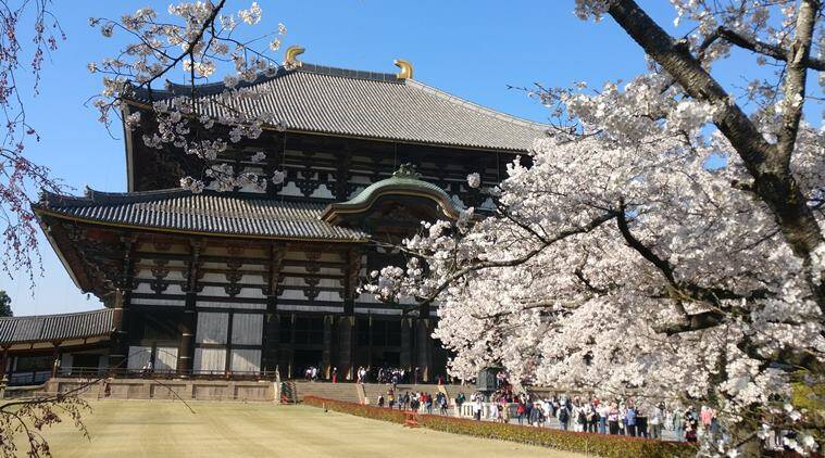 Konnichiwa! 10 things to see and do on a family trip to Japan