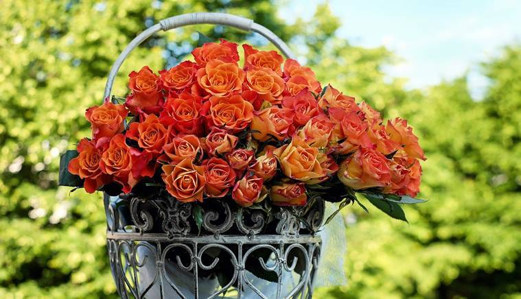 rose day, rose day 2019, happy rose day, happy rose day 2019, rose day date, rose day date 2019, happy rose day date, rose day 2019 date, rose day importance, valentine week, valentine week 2019, vakentine week day list, happy valentine day, valentine day list, valentine week list, valentine week 2019