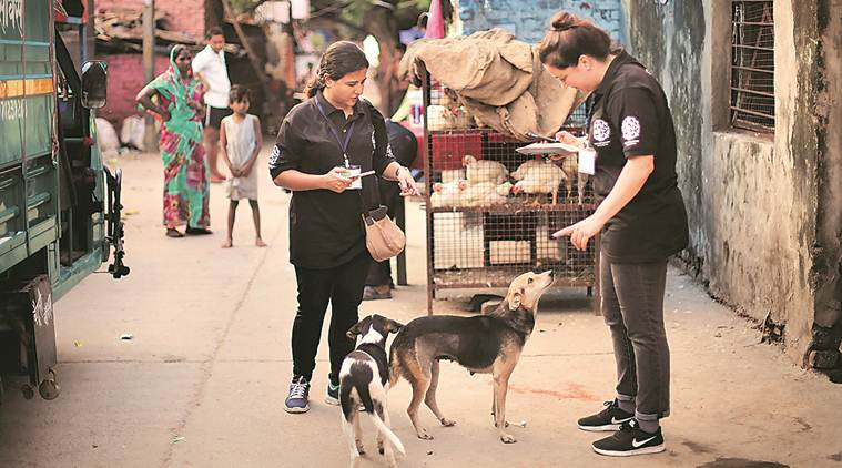 Rabies vaccine in short supply across Delhi, hospitals say have flagged issue