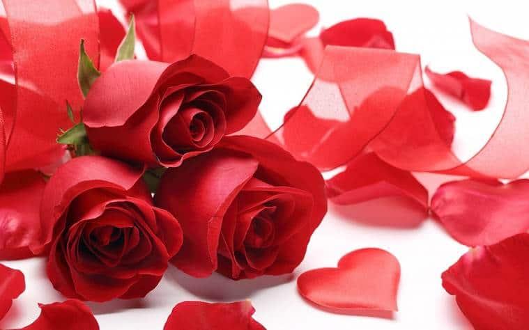rose day, rose day 2019, happy rose day, happy rose day 2019, rose day date, rose day date 2019, happy rose day date, rose day 2019 date, rose day importance, valentine week, valentine week 2019, vakentine week day list, happy valentine day, valentine day list, valentine week list, valentine week 2019