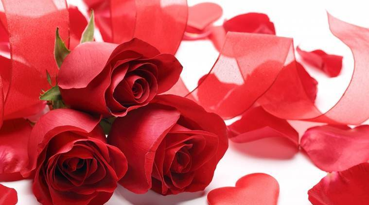 Happy Rose Day 2019 Date Importance And Significance Of Each Rose