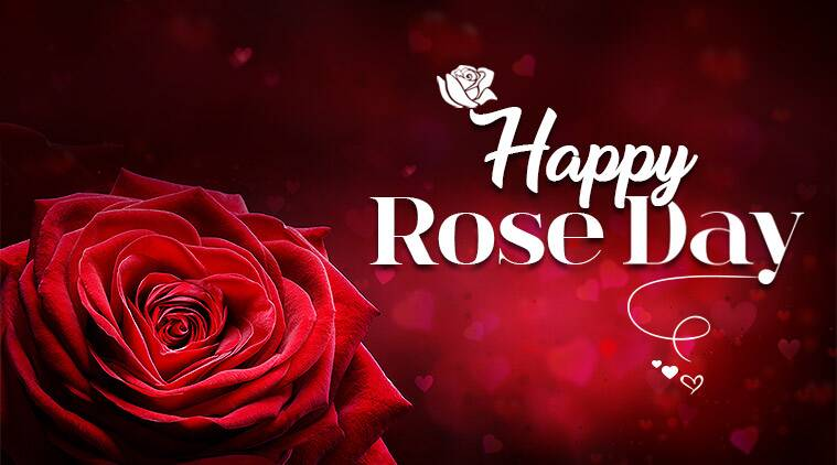 Happy Rose Day 2019: Wishes, Images, Status, Shayari, Photos Quotes, SMS, Messages, for Whatsapp and Facebook