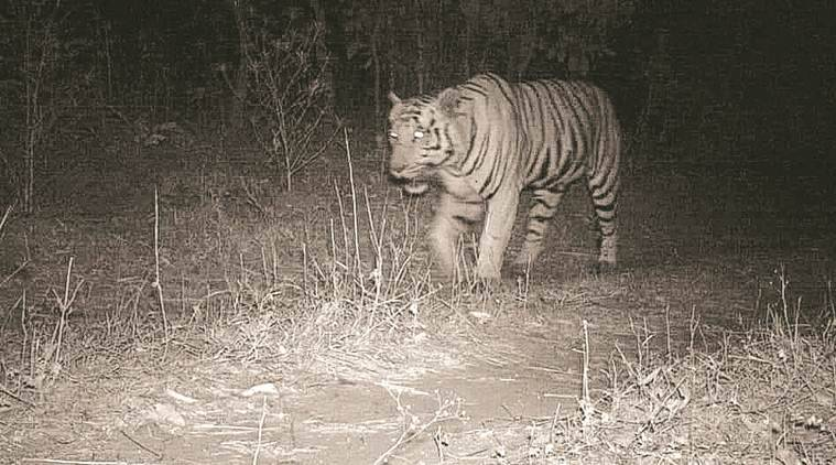 Camera Trap Captures Tiger In Mahisagar, Last Spotted In State In 1985
