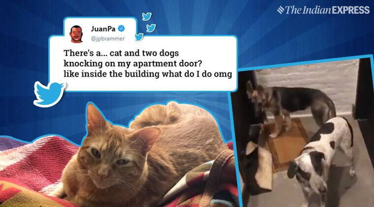 dogs, cats, pets take over apartment, animals take over man's apartment, cat viral post, pets, animals, dog and cats, trending, indian express, indian express news
