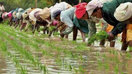 Casual farm labour shrinks by 40% since 2011-12, total job loss nearly 3 crore: NSSO data shows