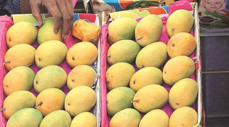 Maharashtra: Alphonso starts arriving, traders hope for a good crop