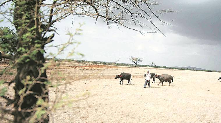 Pune drought, drought in pune, marathwada drought, pune news, indian express