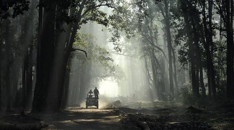 Jim Corbett, jim Corbett national park, highway construction, uttarakhand government, Ramnagar-Kalagarh road, Jim Corbett animals, how to visit jim corbett, Indian Express