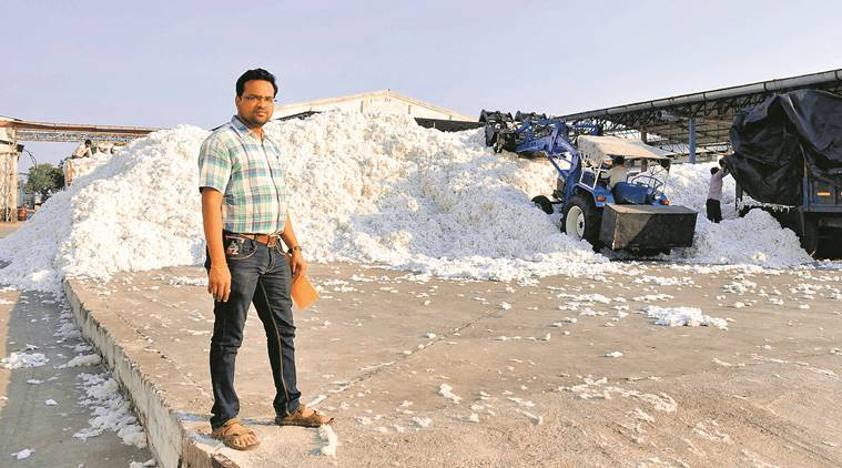 india cotton produce, bt cotton, bt cotton india production, white gold cotton, farming in india, latest news, indian express