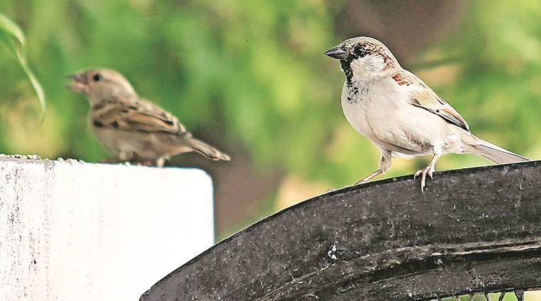 World Sparrow day: Forest dept to set up nests to woo house sparrows