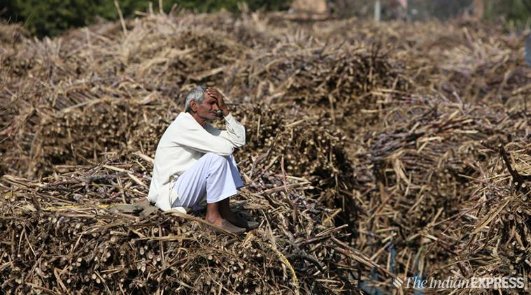 Challenge For Up Govt: Cane Dues Cross Rs 10,000 Cr, Half From First Phase Poll Seats