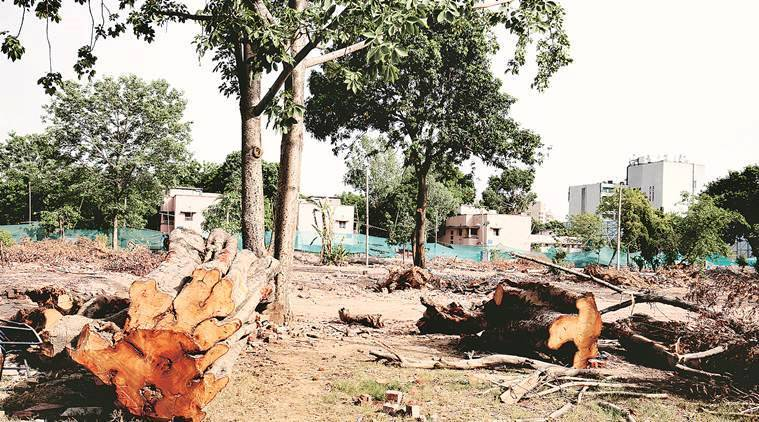 Pune: Trees cut to ensure safety of students, others on campus, say college authorities