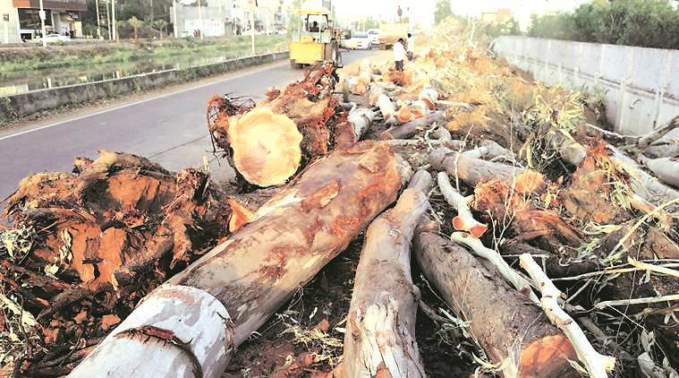 SC puts complete ban on felling of trees in Himachal Pradesh