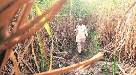 Why central government schemes failed to fix the crisis in sugar sector