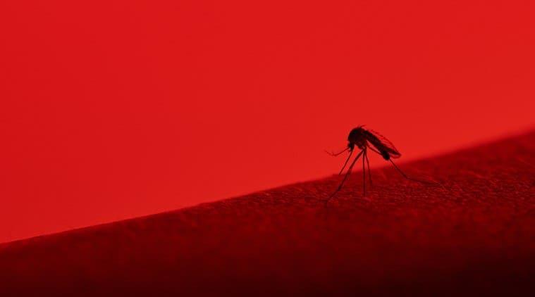 mumbai, mosquitoes, dengue, dengue cases, dengue cases mumbai, mosquito breeding grounds, mosquito breeding ground mumbai, bmc, brihanmumbai municipal corporation, malaria, rain, mumbai rain, mumbai news, indian express news