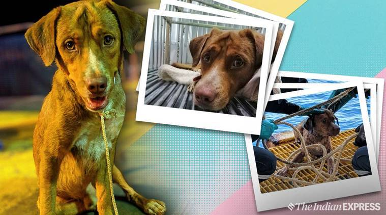 dog, Dog Found Swimming 220 Kms Off Thai Coast, thai dog rescued, oil worker rescue dog, workers rescue dog, trending, indian express, indian express news