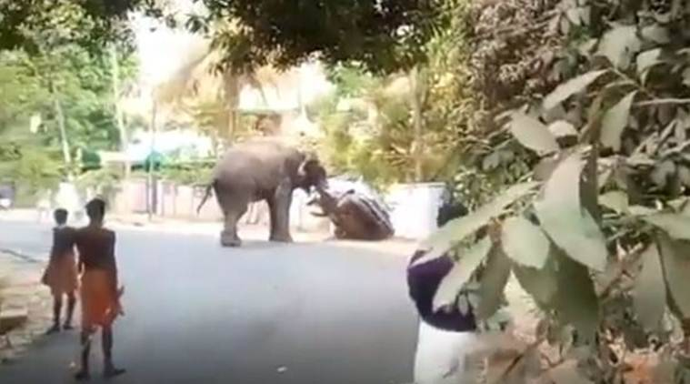 Watch: Elephant goes on rampage in Kerala's Palakkad district, creates panic among residents
