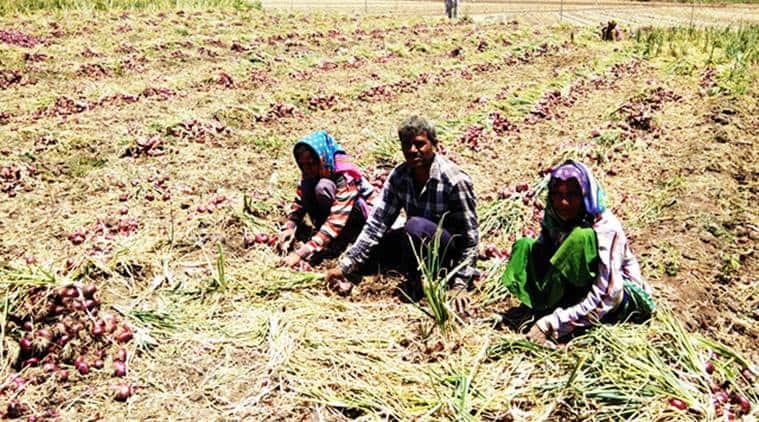 saurashtra farmers, gujarat farmers, election news, lok sabha elections, farm distress, agriculture distress india, lok sabha elections 2019, elections 2019