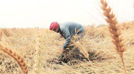 maahrashtra government, maharashtra farmers, maharashtra farm produce, farmers in maharashtra, farm produce in maharashtra, india news, Indian Express