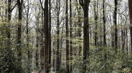 World's forests 'in emergency room' after years of losses