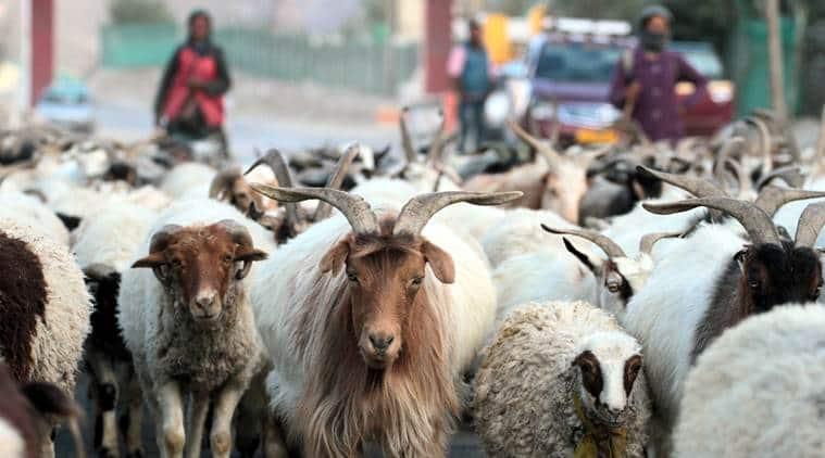 Jammu and Kashmir, Kashmir elections, Kashmir polls, Kargil elections, Kargil polls, Lok Sabha Elections 2019, Decision 2019, election news