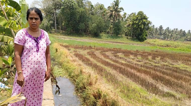 'Give us water, else we won't vote': Water scarcity dominates election discourse in Kerala's Kuttanad