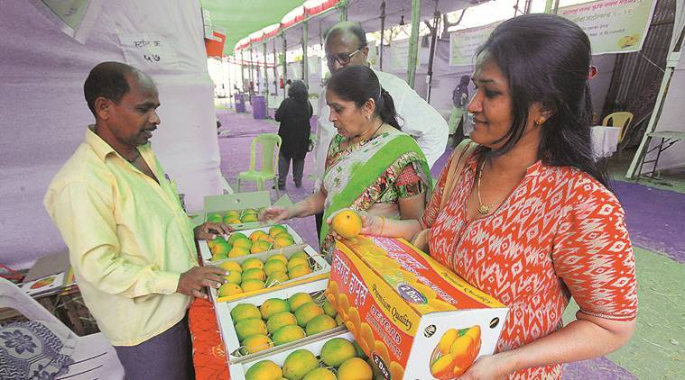 Pune: Alphonso term 'used rampantly', mango growers from state seek to protect exclusivity of product
