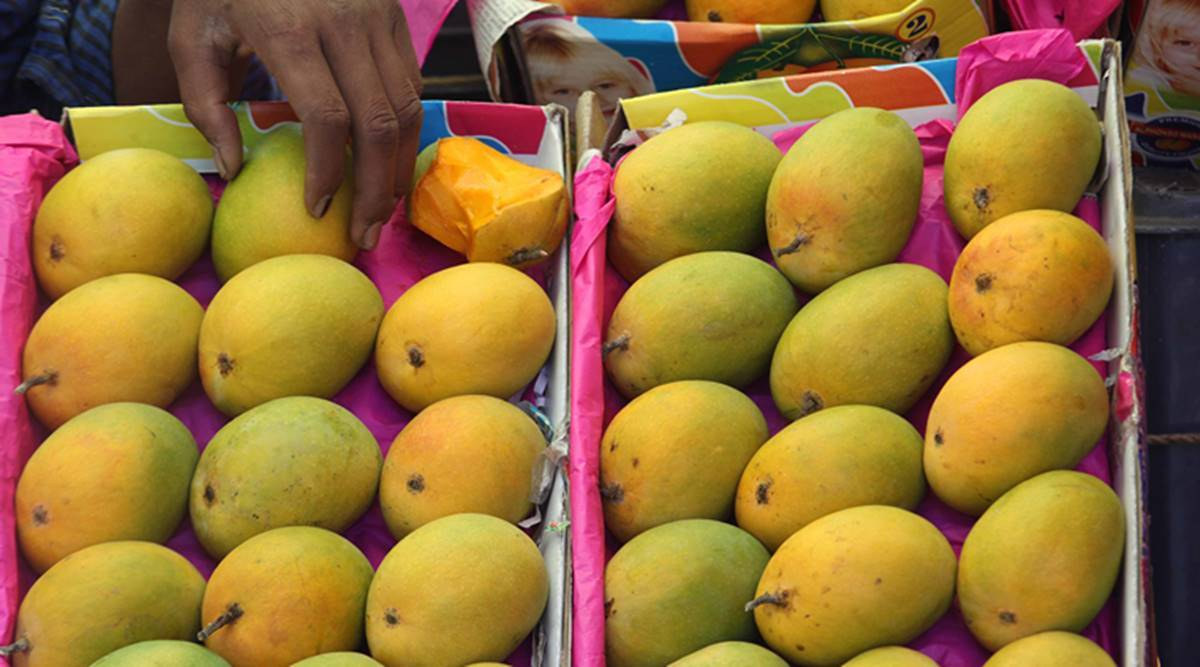 Pune: As mango production falls after long cold spell this year, arrivals in markets dip