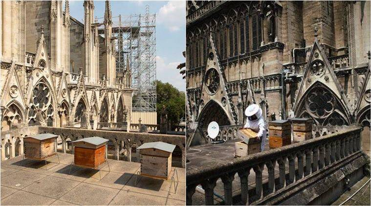 In Miraculous Escape, Bees Living On Notre Dame's Roof Survive Inferno