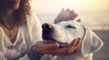 pet dog, dog, stress, indian express news