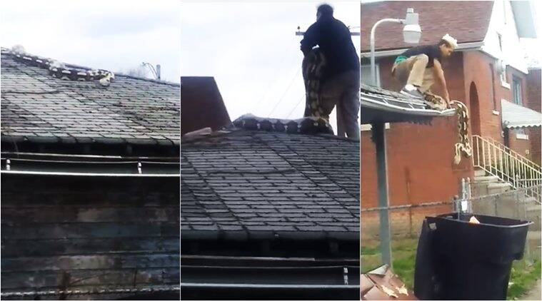 Watch: 18-feet Python Slithers On Garage Roof, Stuns People In Locality