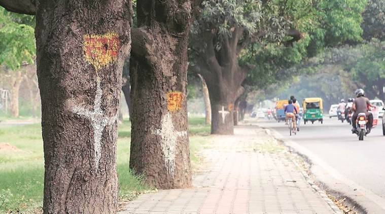 With hundreds of Chandigarh trees at stake, experts question flyover