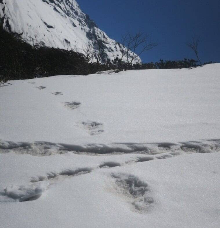 Indian mountaineers believe they've found Yeti footprints