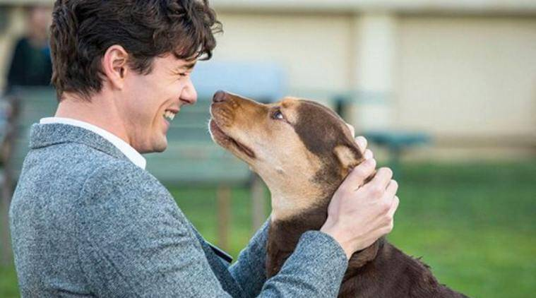 A Dog's Way Home movie review: Just plain ridiculous