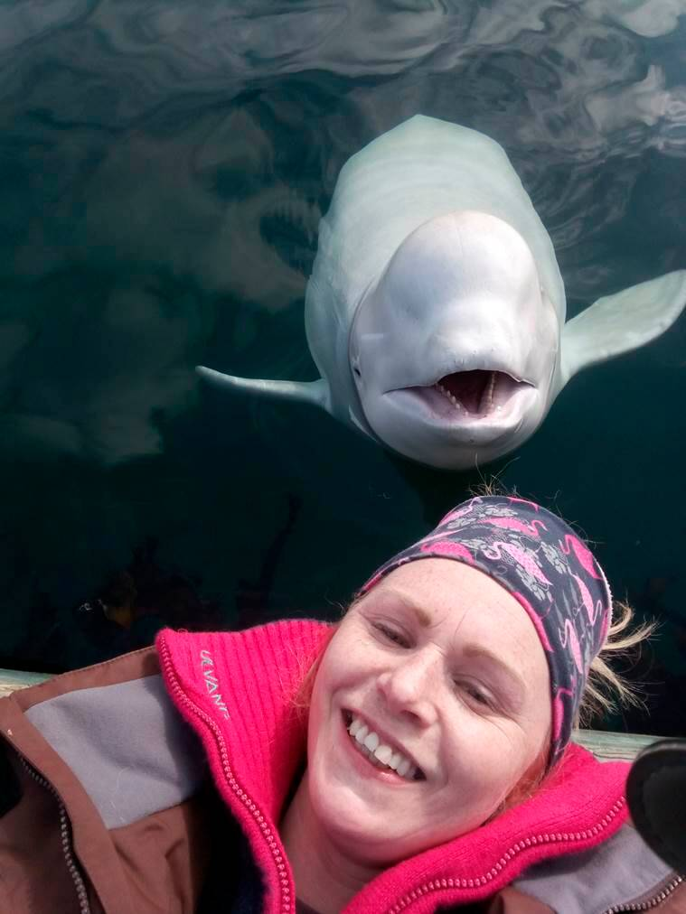Enigmatic Beluga whale off Norway so tame people can pet it