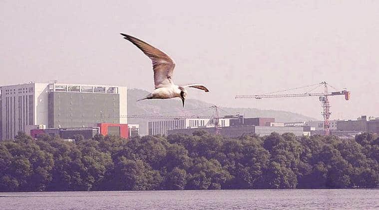 Mumbai air pollution, Bird sighted, india lockdown, mumbai news, indian express news