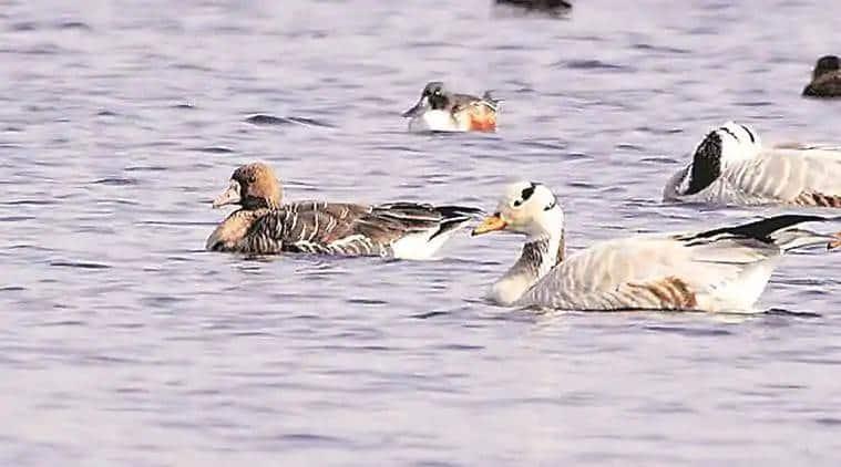 migratory birds, migratory birds day, bird watching places india, bird sanctuaries in india, bird sighting places india, indian express, indian express news