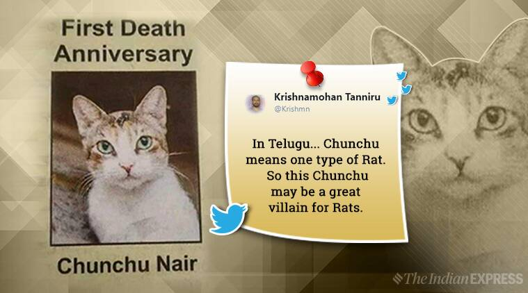 Chunchu Nair, cat with caste, cat obituary, cat obituary twitter, twitter reactions, twitter cat, grumpy cat, trending, indian express, indian express news