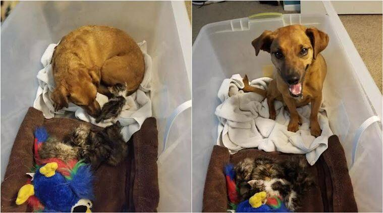 This dog is winning hearts online as he fosters abandoned