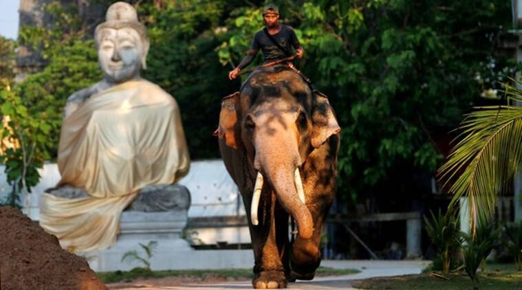 thailand king, Maha Vajiralongkorn, Plai Ekachai, Plai Ekachai elephant, krabi, napier grass, King Bhumibol Adulyadej, brahman texts, world news, indian express