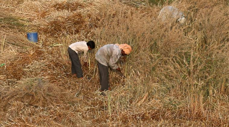 Over 2.69 lakh farmers fail to get first tranche under PM-KISAN scheme